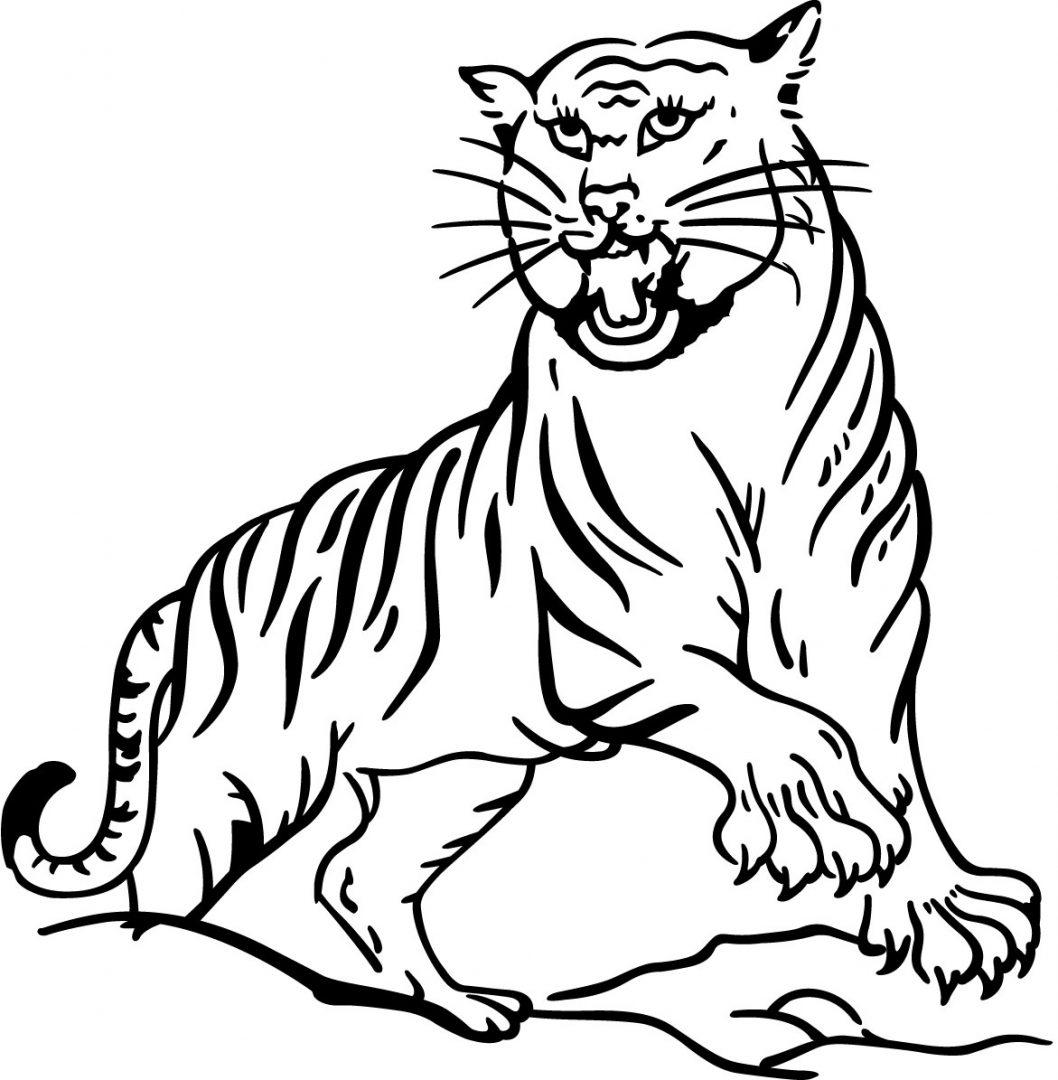 Dibujo para pintar de tigres  Imgenes y fotos
