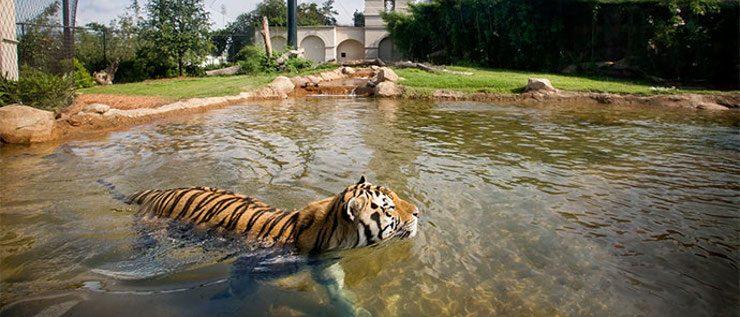 Hábitat de los tigres